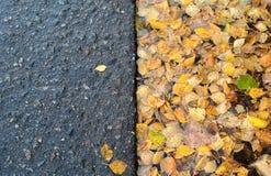 Hojas del abedul amarillo en charco cerca del camino Fotos de archivo