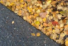 Hojas del abedul amarillo en charco cerca del camino Imagen de archivo libre de regalías