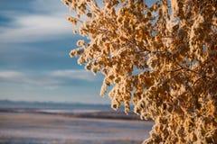 Hojas del abedul amarillo en el hielo Fotografía de archivo libre de regalías