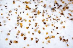 Hojas del abedul amarillo en la nieve Imagen de archivo libre de regalías