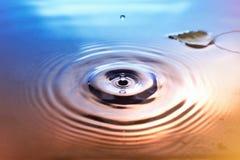 Hojas del abedul amarillo en superficie del agua Fotos de archivo libres de regalías