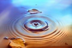 Hojas del abedul amarillo en superficie del agua Foto de archivo libre de regalías