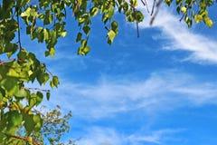 Hojas del abedul contra el cielo azul brillante Imágenes de archivo libres de regalías
