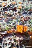 Hojas del abedul de Frost en la tierra Imagen de archivo
