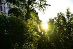 Hojas del abedul en el sol naciente Fotos de archivo libres de regalías