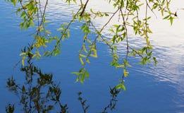 Hojas del abedul y del día soleado sobre el agua azul Fondo Fotografía de archivo