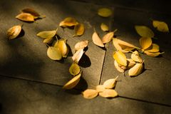 Hojas del amarillo Fotografía de archivo libre de regalías