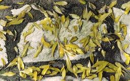 Hojas del amarillo Fotografía de archivo