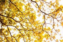Hojas del amarillo Foto de archivo