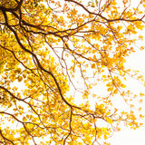 Hojas del amarillo Imagen de archivo