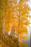 Hojas del amarillo Fotos de archivo