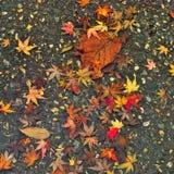 Hojas del amarillo caidas en el asfalto Imágenes de archivo libres de regalías