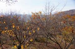 Hojas del amarillo con el paisaje a financiar foto de archivo libre de regalías