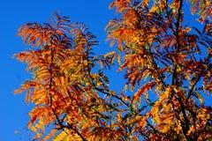 Hojas del amarillo contra el cielo azul Imagen de archivo