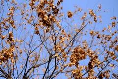 Hojas del amarillo de árboles Imagen de archivo