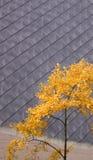 Hojas del amarillo del otoño Foto de archivo libre de regalías