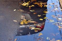 Hojas del amarillo del otoño en la calle Imagen de archivo