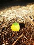Hojas del amarillo del otoño en la tierra Imágenes de archivo libres de regalías