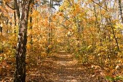 Hojas del amarillo en bosque Imágenes de archivo libres de regalías