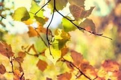 Hojas del amarillo en bosque del otoño Imágenes de archivo libres de regalías