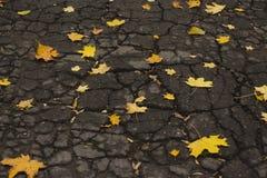Hojas del amarillo en el asfalto agrietado fotografía de archivo libre de regalías