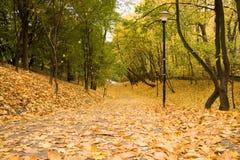 Hojas del amarillo en el camino en parque Fotografía de archivo libre de regalías