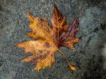 Hojas del amarillo en el camino en otoño imagenes de archivo