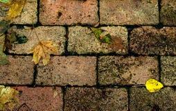 hojas del amarillo en el pavimento Fotos de archivo