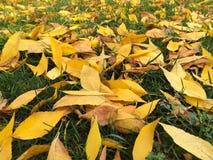 Hojas del amarillo en hierba Imagen de archivo libre de regalías