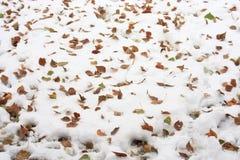 Hojas del amarillo en la nieve Imagen de archivo libre de regalías