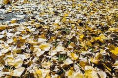 Hojas del amarillo en la tierra Foto de archivo libre de regalías