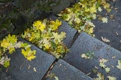 Hojas del amarillo en los pasos Imagen de archivo