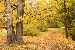 Hojas del amarillo en otoño Foto de archivo libre de regalías