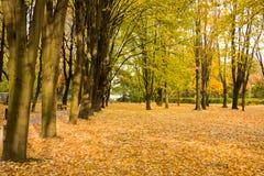 Hojas del amarillo en otoño Imagen de archivo libre de regalías