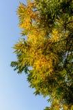 Hojas del amarillo en otoño temprano Fotos de archivo