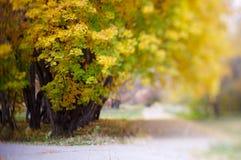 Hojas del amarillo en parque del otoño fotografía de archivo libre de regalías