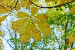 Hojas del amarillo en parque del otoño Fotos de archivo libres de regalías