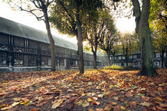 Hojas del amarillo en parque romántico del otoño; caída de oro hermosa adentro Fotos de archivo