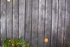 Hojas del amarillo del otoño y conos secos del pino sobre fondo de madera Fondo de madera Imagen de archivo