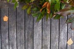 Hojas del amarillo del otoño y conos secos del pino sobre fondo de madera Fotos de archivo