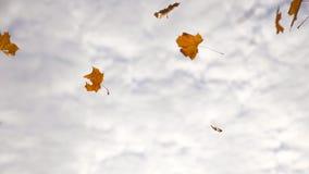 Hojas del amarillo que caen en parque del otoño Fondo hermoso del paisaje temporada de otoño colorida Cierre de la cámara lenta p metrajes