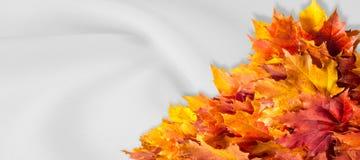Hojas del amarillo rojo del arce del otoño Para los diseñadores banderas Adver Fotografía de archivo
