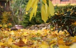 Hojas del amarillo y crisol de flor Imagenes de archivo