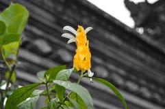 Hojas del amarillo y flor blanca del brote - destacadas Fotografía de archivo