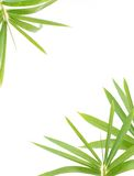 Hojas del bambú Imagenes de archivo