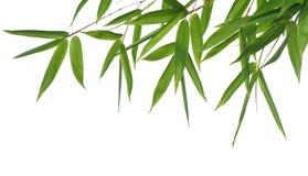 Hojas del bambú Imagen de archivo libre de regalías