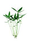 Hojas del bambú aisladas Fotos de archivo