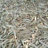 Hojas del bambú de Brown Fotografía de archivo libre de regalías