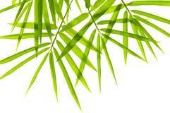 Hojas del bambú Fotos de archivo