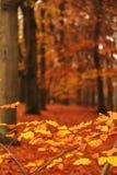 Hojas del bosque Foto de archivo libre de regalías